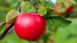 Fruit Money: отзывы и обзор